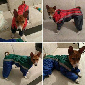 одежду для собаки