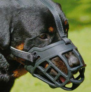 амуниция для собаки