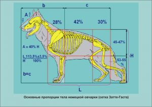 экстерьер собаки