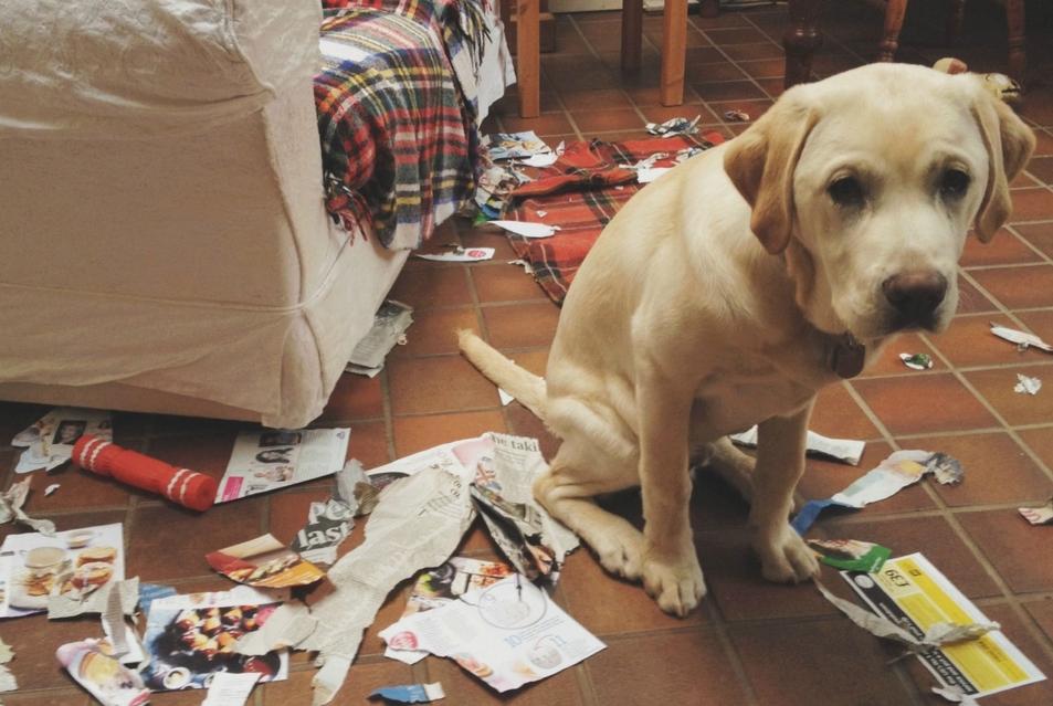 коррекция поведения, коррекция поведения собак