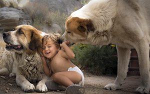 ребенок и собака, собака и ребенок