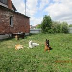 передержка для собаки