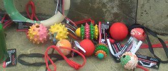 игрушки и лакомства
