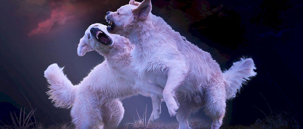 драки собак