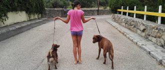 какую выбрать собаку