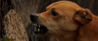 доминирующая собака, иерархическая агрессия