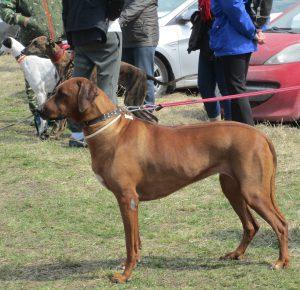 дрессировка собаки в Екатеринбурге