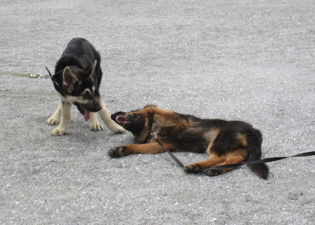 игры щенков