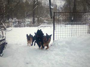 игры собак