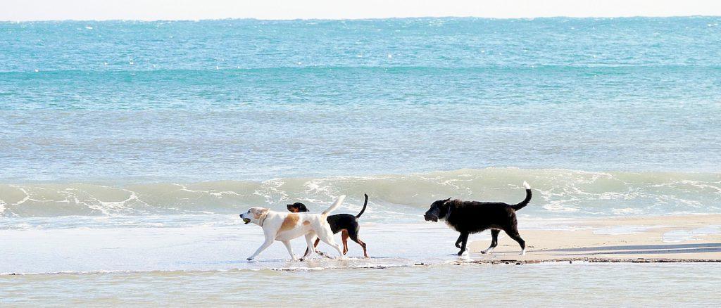 неприличное поведение у собак