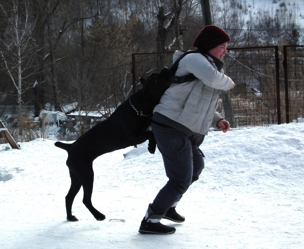собака прыгает на людей