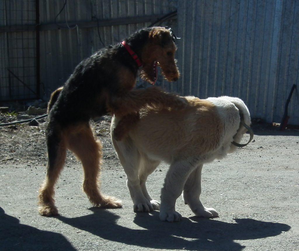 неприличное поведение у собаки
