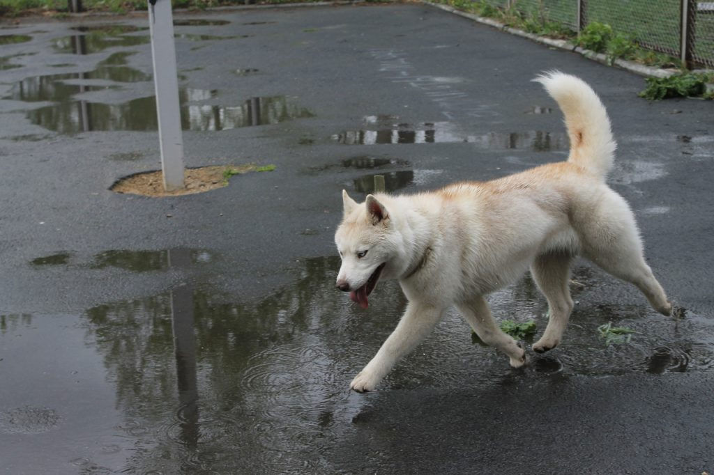 собака не слушается на улице