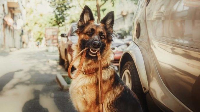 коррекция поведения у собаки