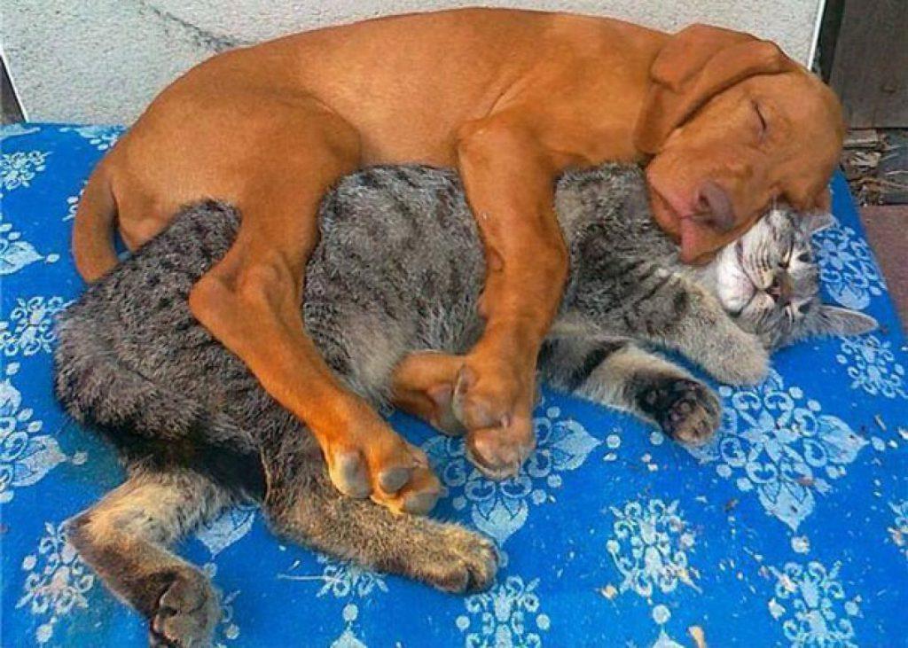 Собака и кошка вместе в одном доме