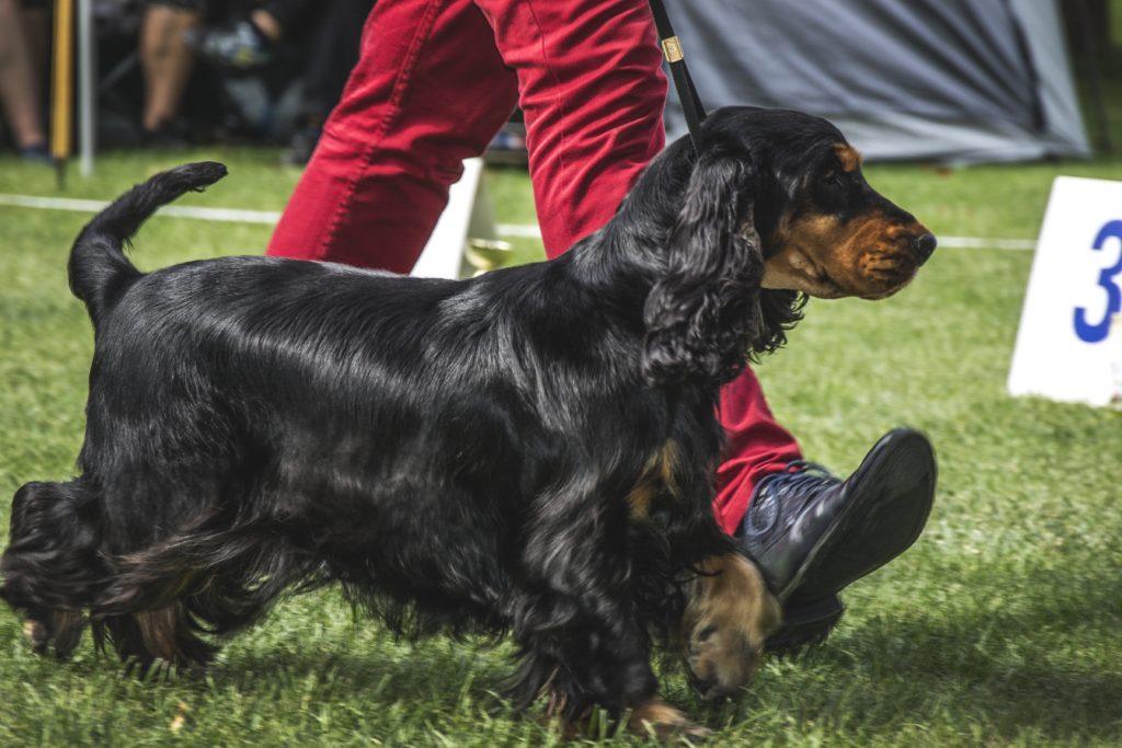 собаки и охота