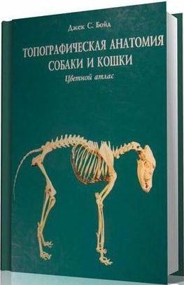 топографическая анатомия собаки