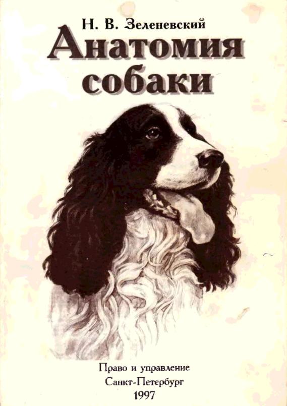зеленевский анатомия собаки