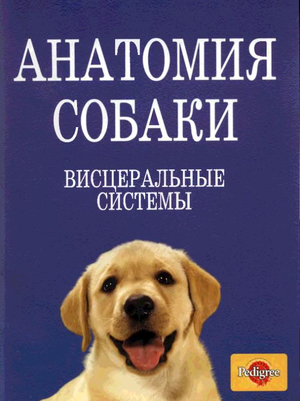 анатомия собаки висцеральные системы