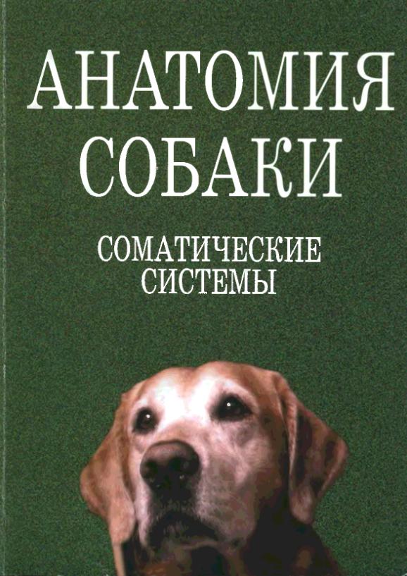 анатомия собаки соматические системы