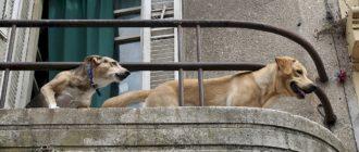 караульной собаки