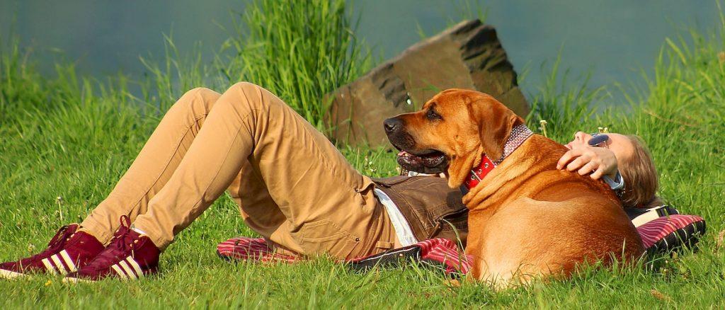 Обучение собак и значение взаимоотношений владелец собаки