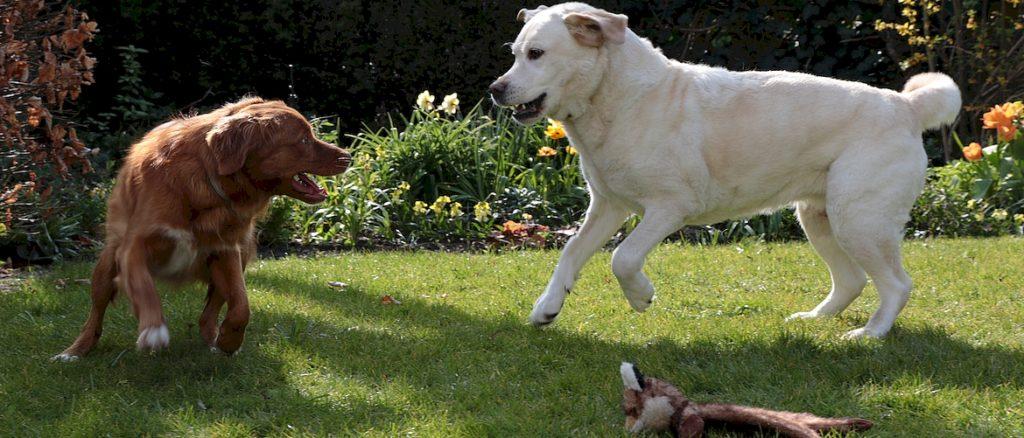 Общение у собак. Язык жестов и мимики