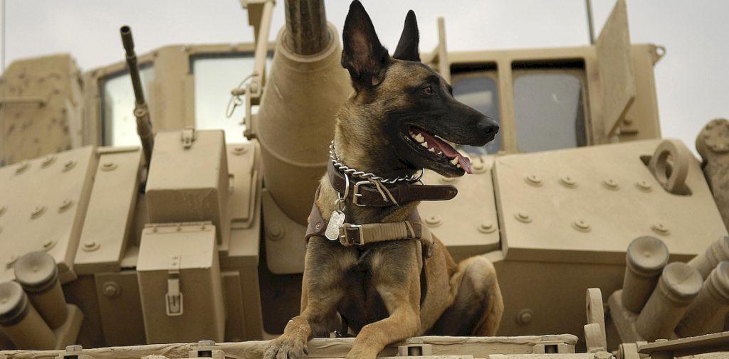 поиск взрывчатых веществ собаками