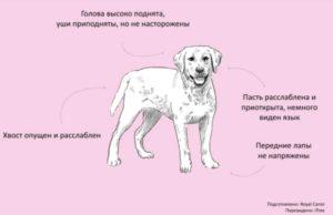 общение с собакой