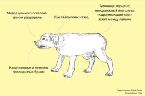 общение у собак