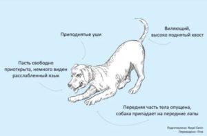 общение собак