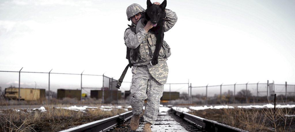 собака охранник
