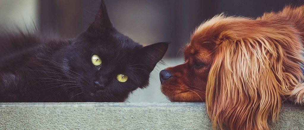 Социализация и поведение собаки