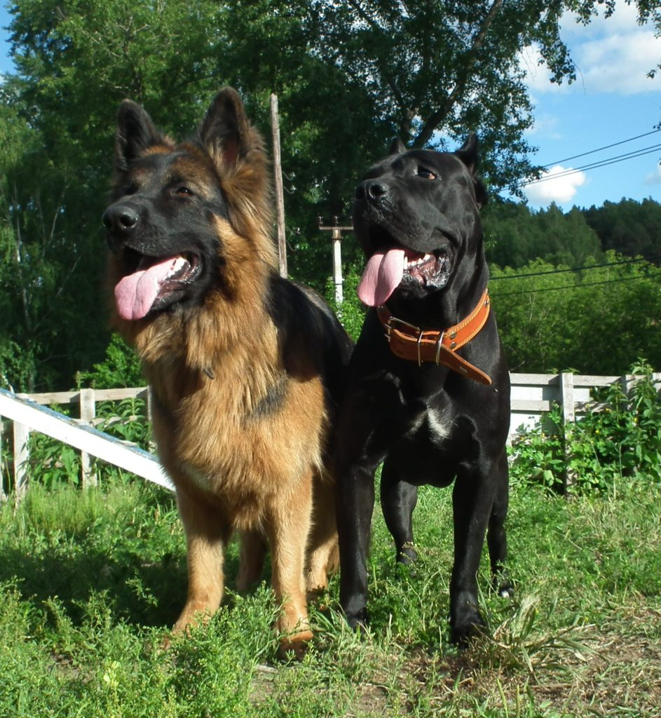 инстинкт собаки