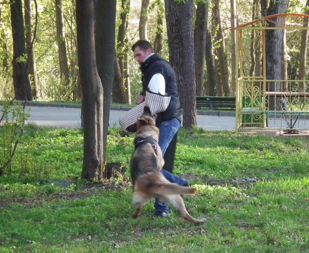 Собака охранник или телохранитель